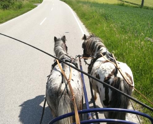 Zweispännige Ponykutsche