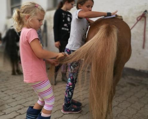 Zusammenhelfen beim Pony vorbereiten.