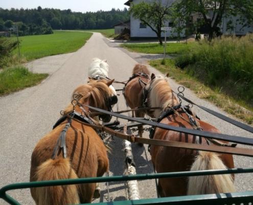 Vierspännige Ponykutsche